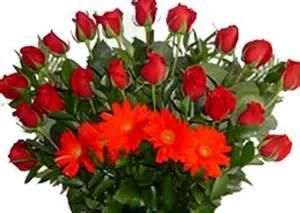 imagenes de rosas rojas en movimiento imagenes de rosas rojas hermosas con movimiento imagen