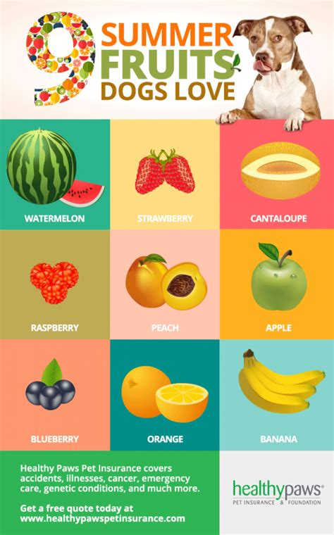 fruit for dogs 9 summer fruits dogs healthy paws