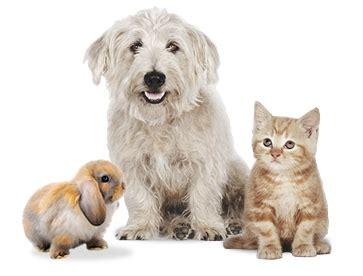 pet r pets animals