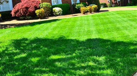 Sixteen Acres Garden by Six Steps To Renovating Your Lawn 16 Acres Garden Center