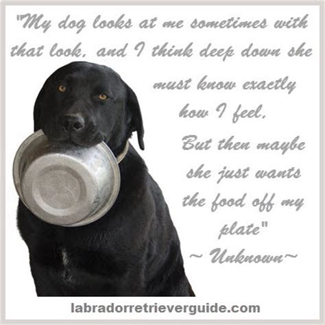 Black Lab Meme - funny black lab memes memes