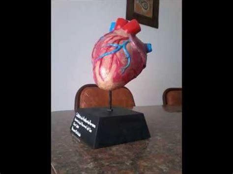 como hacer maquetas de corazon maqueta coraz 243 n anatom 237 a humana bruno sassola youtube