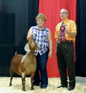 judge sherri stephens weak davidson livestock boer goats show awards