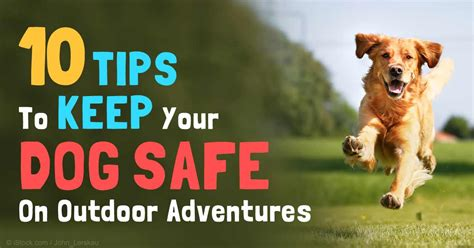 9 Tips On Keeping Your Outside Pet Safe From The Cold by Safety Tips During Outdoor Activities With Your Dogs