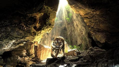 pc wallpapers nature hd wallpaper cave tiger wallpapers best wallpapers