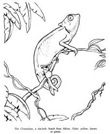 chameleon coloring page chameleon coloring pages for az coloring pages