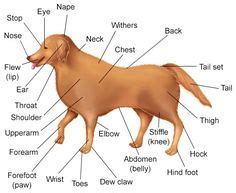 images dog anatomy dogs body diagram