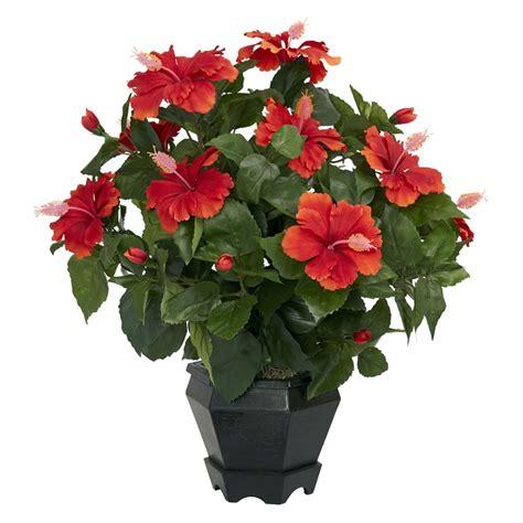 fiori per appartamento fiori da interno ecco alcune variet 224 perfette per l