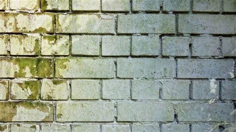 muffa muri interni muffa sui muri tutti i sistemi per eliminarla efficacemente