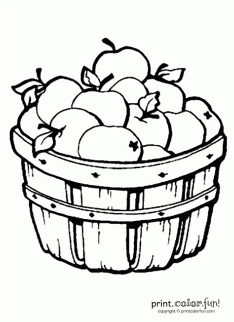 apple barrel coloring pages apples in a barrel coloring page print color fun