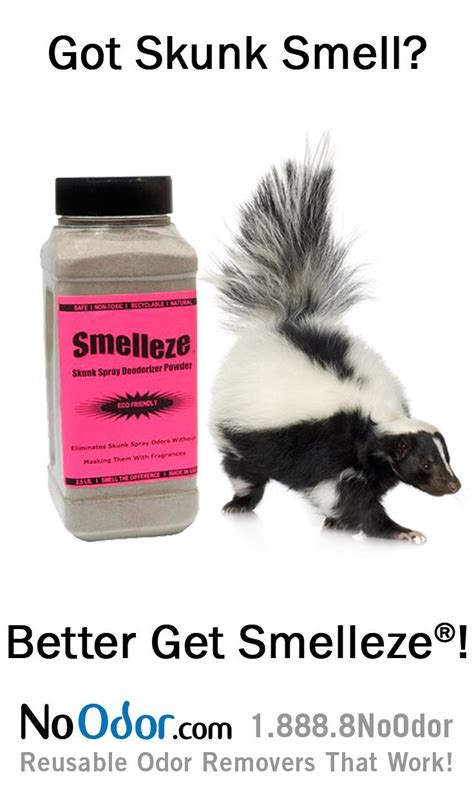 dog sprayed by skunk house smells 25 unique skunk smell ideas on pinterest skunk smell remover dog skunk and skunk
