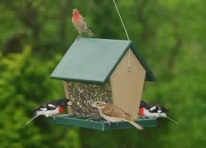 Hopper Bird Feeders How To Build A Hopper Bird Feeder Ebay
