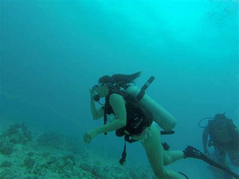 dive dive hawaii scuba diving 06 04 2016
