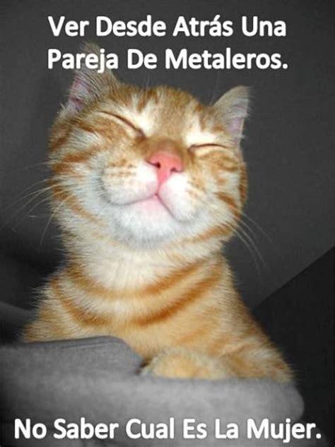 imagenes reales comicas 45 im 225 genes de gatos y perros con frases chistosas y