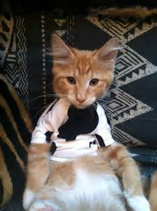 These 18 photos of cats in clothes might just be the best thing on the
