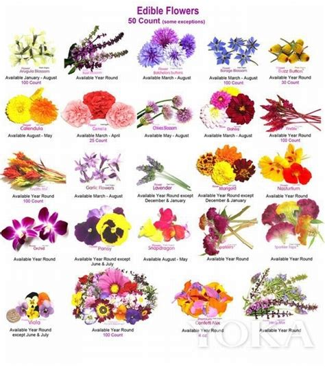 List Of Garden Flowers Common Names Sleigh Crib Crib Dimensions Baby Crib Design Inspiration Diy Baby Crib Sleigh Dollhouse