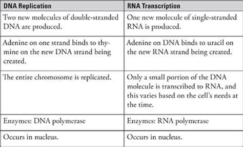 7 proteins involved in dna replication transcription and translation subject review sat