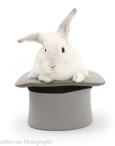 Top Rabbit With Hat white rabbit in a top hat photo wp18409