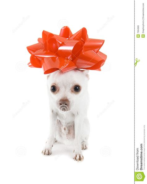 puppy present puppy present royalty free stock image image 7364966