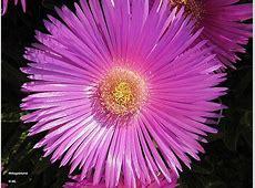 Flora in Kroatien – Kroatien Lexikon .txt
