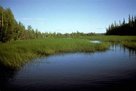 pictures of landscaping file green high sw grass in water landscape jpg wikimedia commons