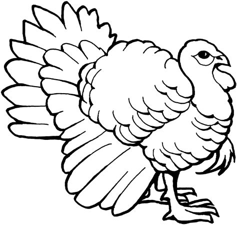 coloring pages turkey free turkey line art clipart best