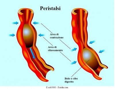 dolore rettale interno ragadi anali in adulti e bambini sintomi cura crema e
