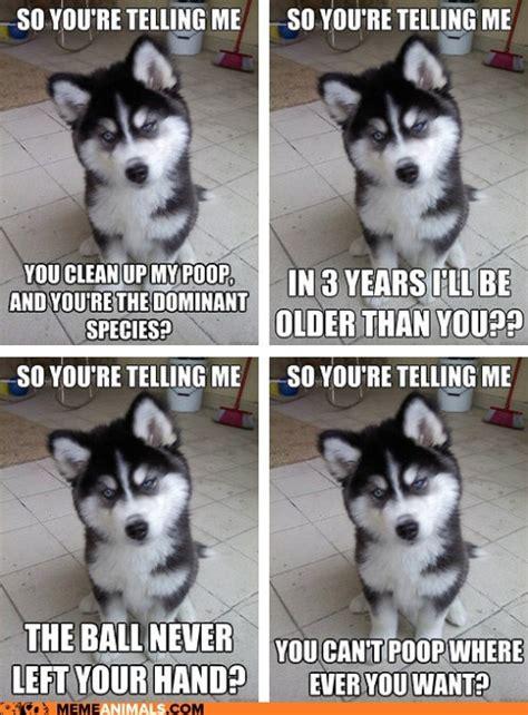 Funny Animal Memes Tumblr - animal meme on tumblr