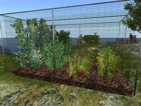 fruit tree cage second marketplace bliss patch soft fruit