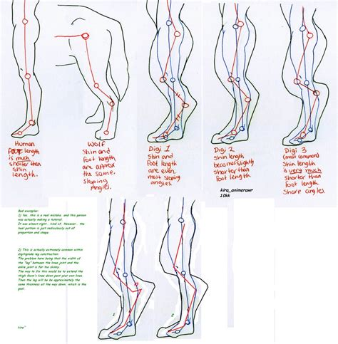 how to reference a diagram digitigrade leg foaming proportions study by 10kk on