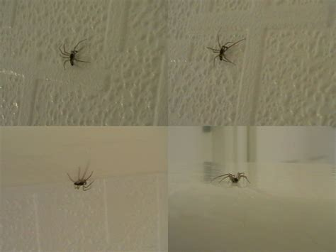 baby house baby house spiders