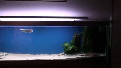 aquarium design for arowana large aquarium with stingrays arowana remote control and