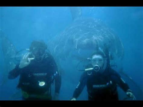 megalodon shark caught on tape 60 ft. youtube