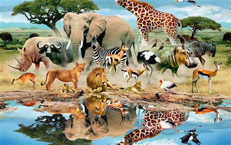 watering hole wildlife muraljpg wildlife pinterest