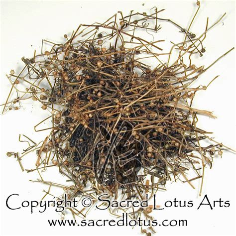 She Se Cao Beverage herb bai hua she she cao oldenlandia or heydyotis herba hedyotidis diffusae