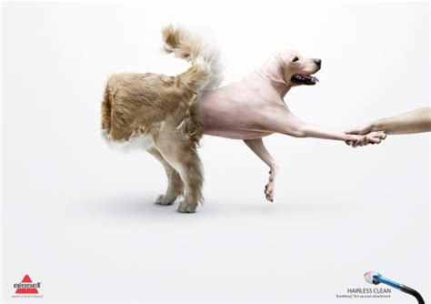 hairless golden retriever hairless clean quot insideout golden retriever quot print ad by fortune promoseven bahrain