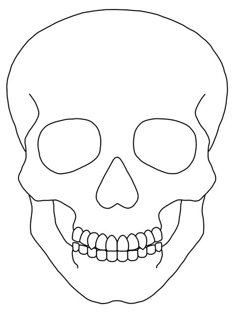 blank sugar skull template simple skull drawing free clip free clip
