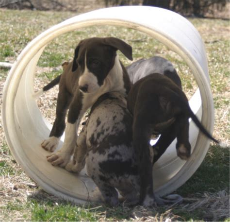 how many puppies can a the time jahari shadowfax puppies