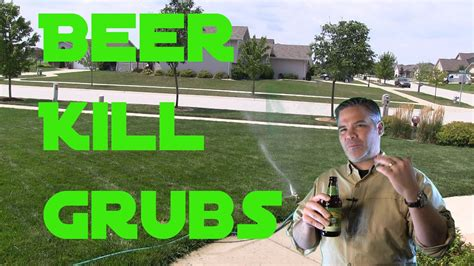 does beer kill grub worms in the lawn doovi