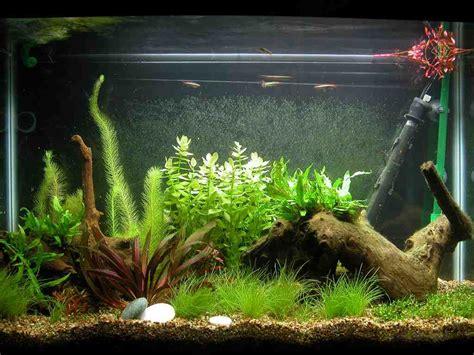 cool aquarium decorations decor ideas