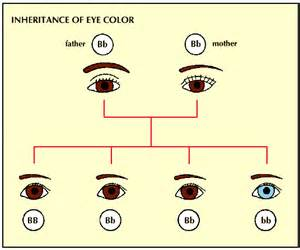 who has the dominant gene for eye color mr carrier genetics