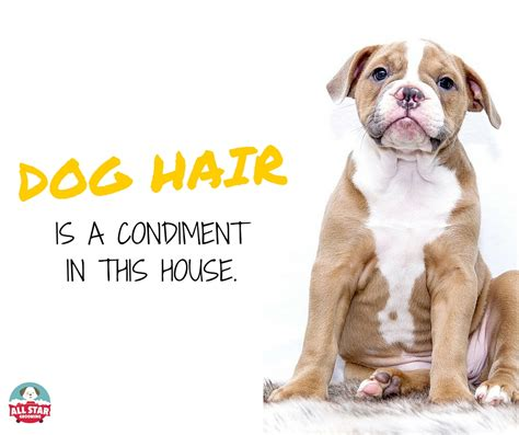 Excessive Shedding In Dogs by All Grooming Author At All Grooming
