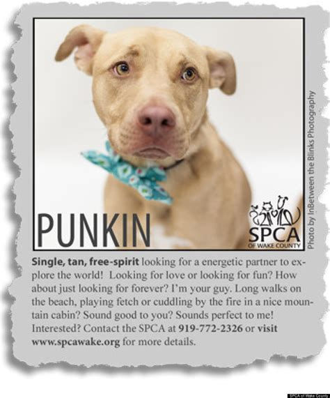 puppy ads must pit bulls animal rescue creates adorable personal ads for dogs who need a