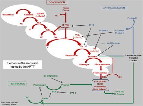 test coagulazione fattori cofattori e test clinici nel processo di
