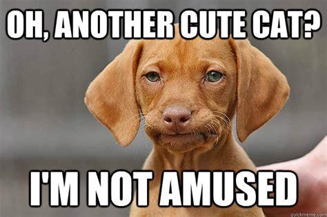 Weiner Dog Meme - weiner dog meme memes