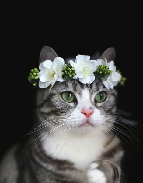 White Budroses Flower Crown 1 cat flower crown white pet architects