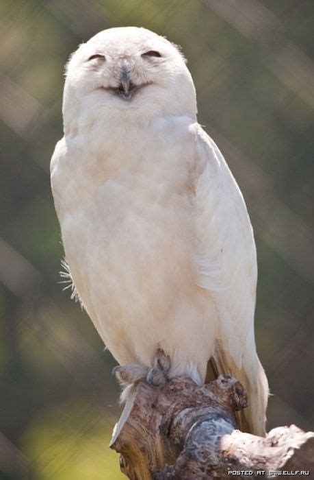 Happy Owl Top 664 best owls real or not images on barn owls cutest animals and the birds