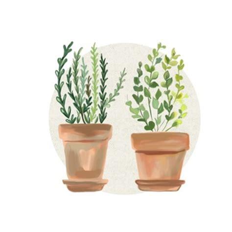 foto di vasi di fiori vasi da fiori foto e vettori gratis