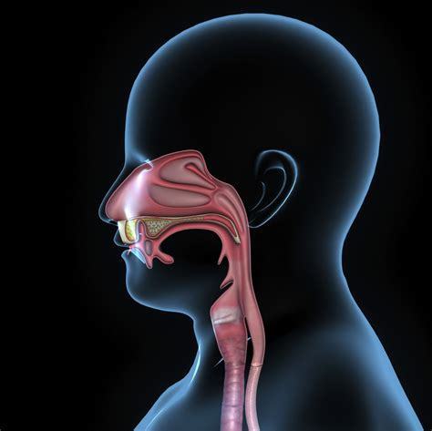 stuffy nose chronic stuffy nose causes answers and relief