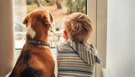 do dogs feelings do dogs feelings science has the answer top tips